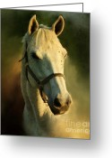 Portriat Greeting Cards - Horse Head Portriat Greeting Card by George Lai