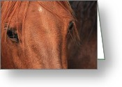 Quarter Horse Greeting Cards - Horse hide Greeting Card by Jim Sauchyn