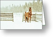 Blizzard Greeting Cards - Horse In A Snowstorm Greeting Card by Roberta Murray - Uncommon Depth