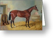 Horserace Greeting Cards - Horse in a Stable Greeting Card by John Frederick Herring Snr