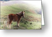 Caballo Greeting Cards - Horse in Akalarra fields Greeting Card by Fernando Alvarez