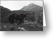 Caballo Greeting Cards - Horse in Urbia Greeting Card by Fernando Alvarez