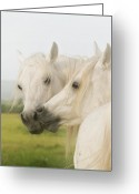 Portrait Greeting Cards - Horse Kiss Greeting Card by El Luwanaya Arabians
