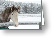 Fence Greeting Cards - Horse Looking Over Fence During Snow Storm Greeting Card by © Brigitte Smith