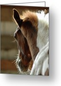 Animal Head Greeting Cards - Horse Greeting Card by Lynn Koenig