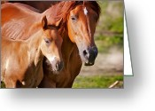 Farm Fields Greeting Cards - Horse Moves 4 Greeting Card by Nathan Larson