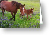 Texas Bluebonnet Greeting Cards - Horse On Bluebonnet Trail Greeting Card by David Hensley