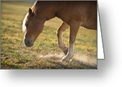 Sunset Light Greeting Cards - Horse Pawing In Pasture Greeting Card by Steve Gadomski