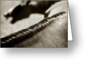 Mane Greeting Cards - Horse Play Greeting Card by David Bowman