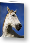 Horse Greeting Cards - Horse portrait Greeting Card by Gaspar Avila