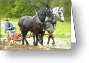 Plowing Greeting Cards - Horse Power 2 Greeting Card by Peggy  McDonald