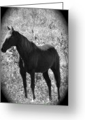 Quarter Horse Greeting Cards - Horse Scope Greeting Card by Debra     Vatalaro
