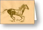 Jump Drawings Greeting Cards - Horse Study Greeting Card by Andrew  Pimenov