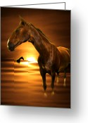 Dusk Mixed Media Greeting Cards - Horse Greeting Card by Svetlana Sewell