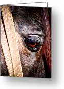 Lashes Greeting Cards - Horse Tears Greeting Card by Keith Allen