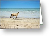 Animal Themes Greeting Cards - Horse Walking On Beach Greeting Card by Vitor Groba