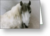White White Horse Digital Art Greeting Cards - Horsehead Greeting Card by Gun Legler