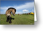Fyn Greeting Cards - Horsepower Greeting Card by Robert Lacy