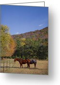 Reds Of Autumn Greeting Cards - Horses and Autumn Landscape Greeting Card by Kathy Clark