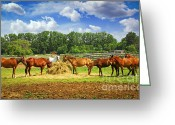 Feeding Greeting Cards - Horses at the ranch Greeting Card by Elena Elisseeva