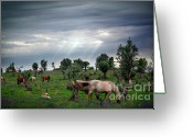 Feed Greeting Cards - Horses Eating Greeting Card by Carlos Caetano