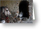 Image Type Photo Greeting Cards - Horses Eyeing One Another Greeting Card by Raul Touzon