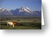 Graze Photo Greeting Cards - Horses Graze At Lost Creek Ranch Greeting Card by Richard Nowitz
