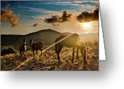 Three Animals Greeting Cards - Horses Grazing At Sunset Greeting Card by Finasteride