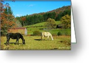Landscape Posters Greeting Cards - Horses Grazing the Pasture Greeting Card by Sheila Kay McIntyre