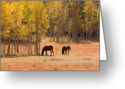 Caballo Greeting Cards - Horses in The Autumn Aspens Greeting Card by James Bo Insogna