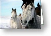 Four Animals Greeting Cards - Horses In The Snow Greeting Card by Lori Andrews