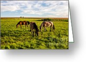Bodo Herold Greeting Cards - Horses in the Sunset Greeting Card by Bodo Herold