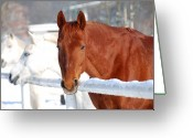 Dressage Photo Greeting Cards - Horses Greeting Card by Jaroslaw Grudzinski