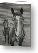 Animal Portrait Pastels Greeting Cards - Horses Greeting Card by Jim Figora