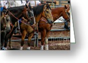 Hall Of Fame Greeting Cards - Horses Greeting Card by Michelle Frizzell-Thompson