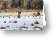 Blue_tit Greeting Cards - Horses running Greeting Card by Odon Czintos