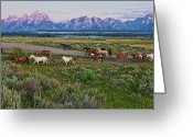 Mountain Range Greeting Cards - Horses Walk Greeting Card by Jeff R Clow