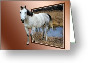 Caballo Greeting Cards - Horsing Around Greeting Card by Shane Bechler
