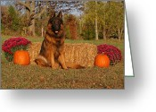 Indiana Autumn Greeting Cards - Hoss in Autumn II Greeting Card by Sandy Keeton