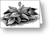 Linoleum Greeting Cards - Hosta, Lino Print Greeting Card by Gary Hincks