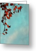 Red Maple Greeting Cards - Hot and Cold Greeting Card by Aimelle