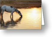 Ron Mcginnis Photography Greeting Cards - Hot Day Ahead Greeting Card by Ron  McGinnis