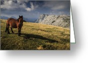 Caballo Greeting Cards - Hot grass in Urkiolamendi Greeting Card by Fernando Alvarez