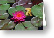 Nature Greeting Cards - Hot Magenta Lily Greeting Card by Kimberly Gonzales