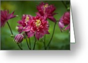 Preppy Greeting Cards - Hot Pink Columbine Greeting Card by Teresa Mucha