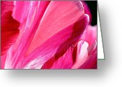 Bright Greeting Cards - Hot Pink Greeting Card by Rona Black