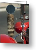 Coon Greeting Cards - Hot Rod Coons Tail Greeting Card by Jill Reger
