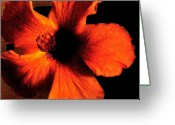 Decor Floral Picture Cards Greeting Cards - Hotfire Hibiscus Greeting Card by Marsha Heiken