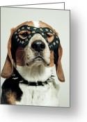 Head Greeting Cards - Hound In Black Mask Greeting Card by Darren Boucher