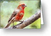 House Finch Greeting Cards - House Finch Perched . 40D7930 Greeting Card by Wingsdomain Art and Photography